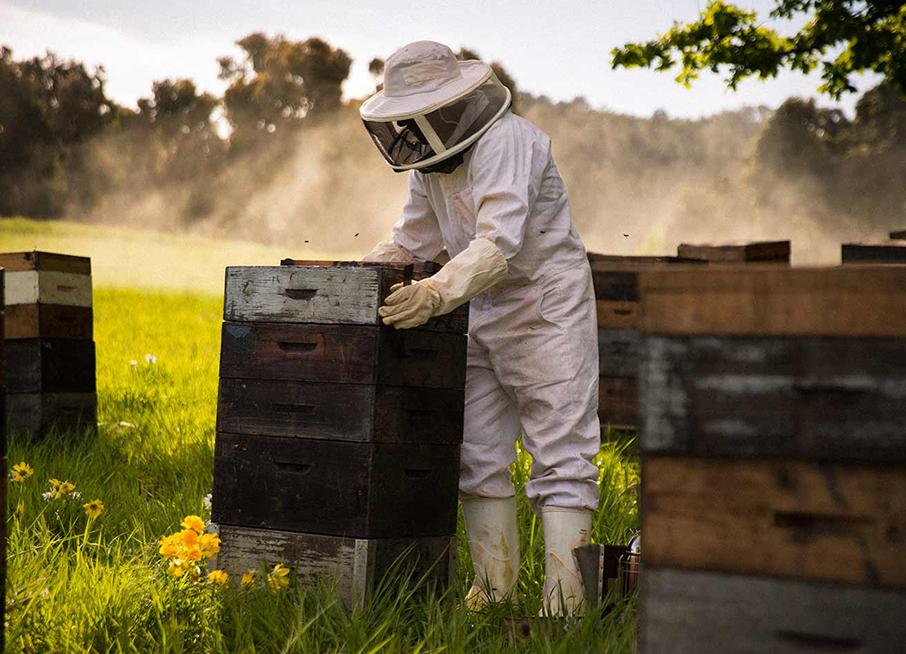 Arnaud en tenue d'apiculteur