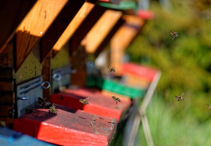 A l'entrée de la ruche